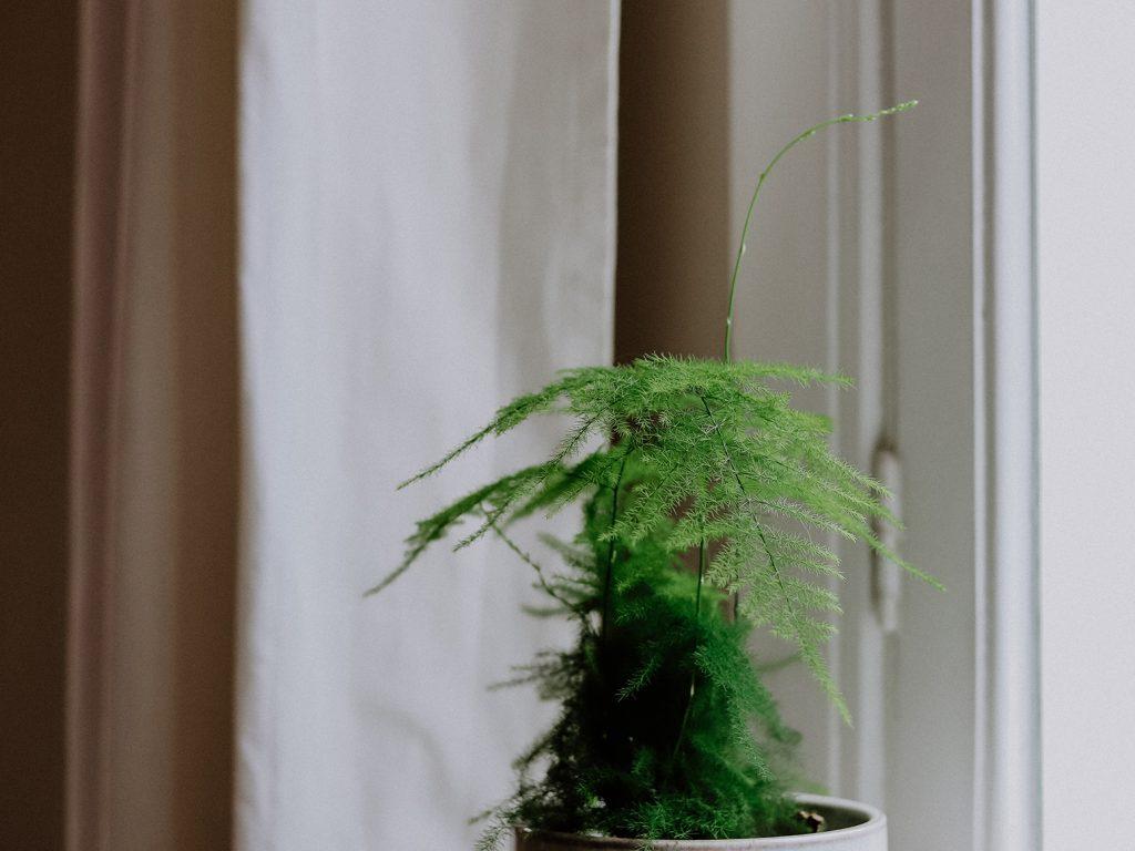 Luftreinigende Pflanzen: Diese 15 Pflanzen verbessern dein Raumklima